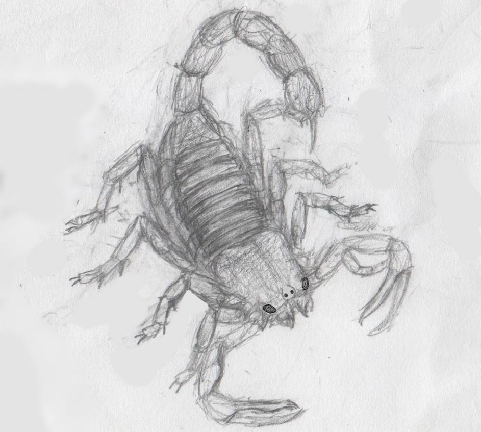 Pulmonoscorpius