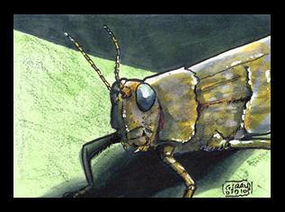 Grasshopper Sketchcard