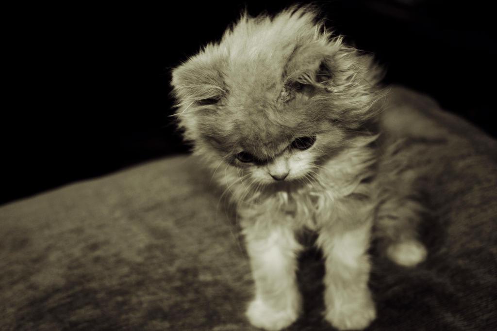 Sad Cat by Valuediz