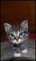 Hello Kitty..