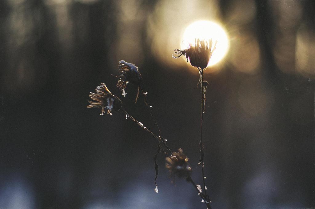 winter sunset 3. by ilmari-nen