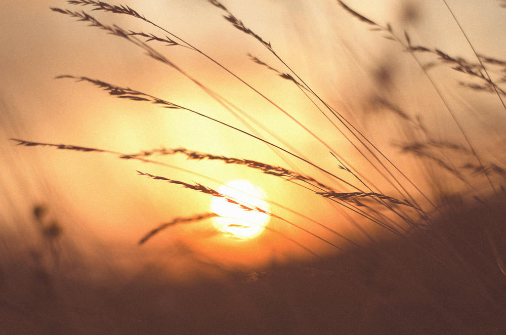 goodbye, summer. by ilmari-nen