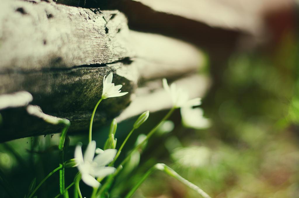 forest mornings. by ilmari-nen