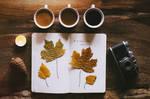 autumn feeling.