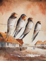 Swallows by sanderus