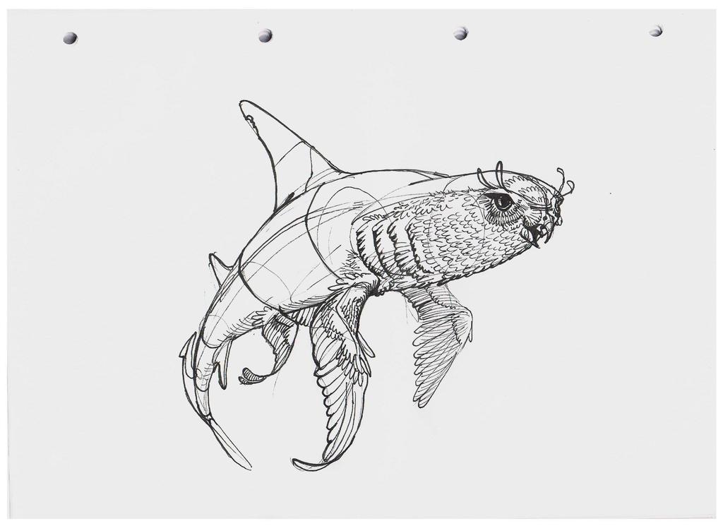 Shark hybrid drawing - photo#41