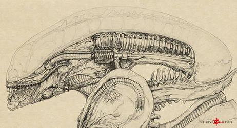 Xenomorph Alien Big Chap