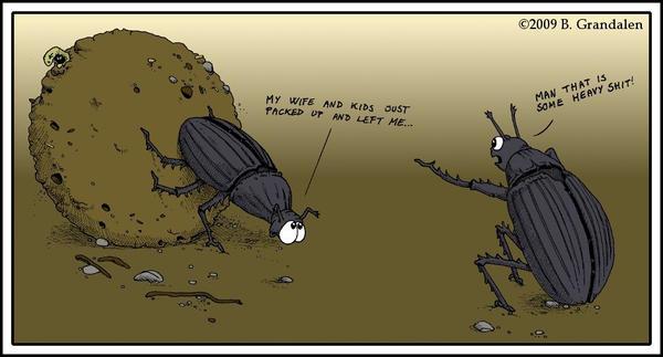 Dung beetles by devart2009