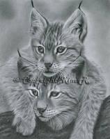 Wild Brothers 2 by Kim1486