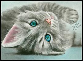 Kitten by Kim1486