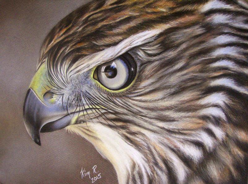Hawk by Kim1486