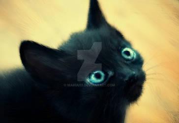 Cat by MaruU13