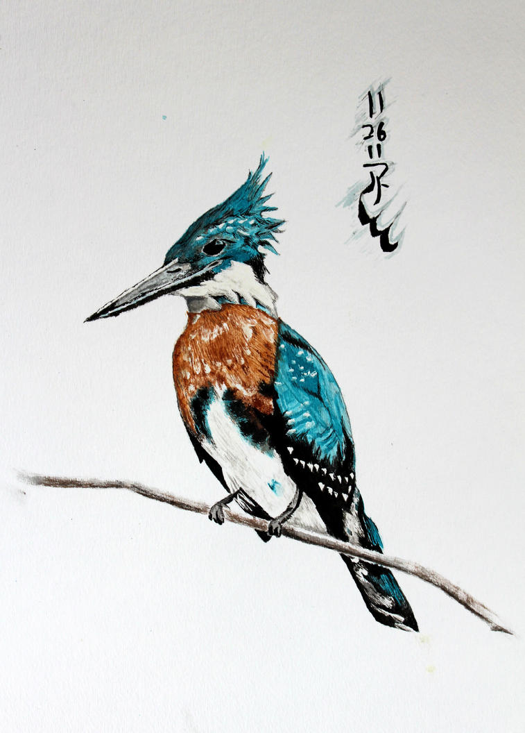 Amazon Kingfisher by Boio8010