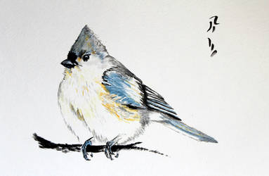 Tufted Titmouse by Boio8010
