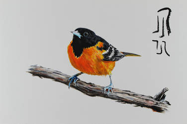 Northern Oriole by Boio8010