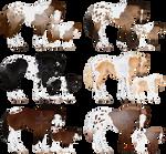 Pintaloosa Sport Horses  - CLOSED