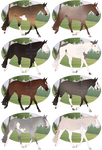 Stock Horse Adopts - SOLD