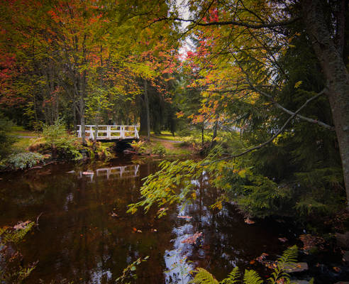 Autumn Calm