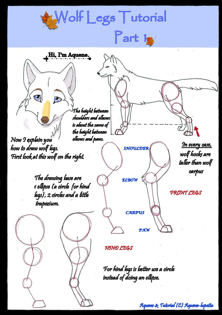 Wolf Legs Tutorial Part 1 By Aquenelupetta