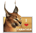 Caracal stamp by Aquene-lupetta