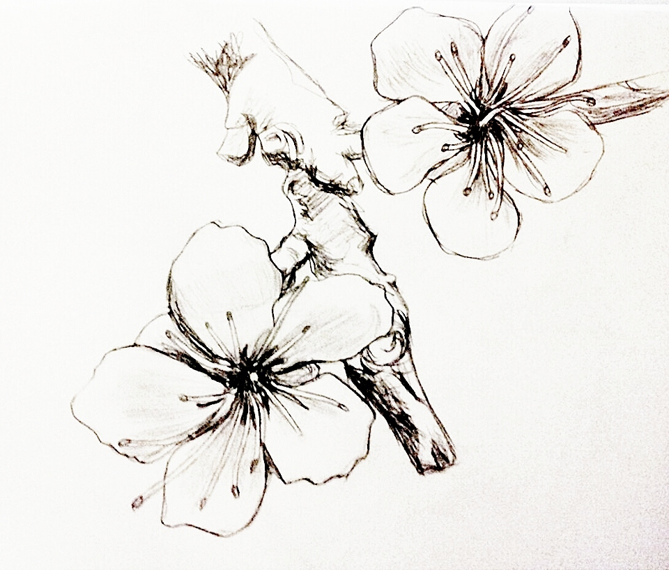 Pretty Drawings Flowers Pictures