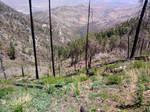 Mount Lemmon 39