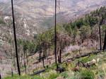 Mount Lemmon 40