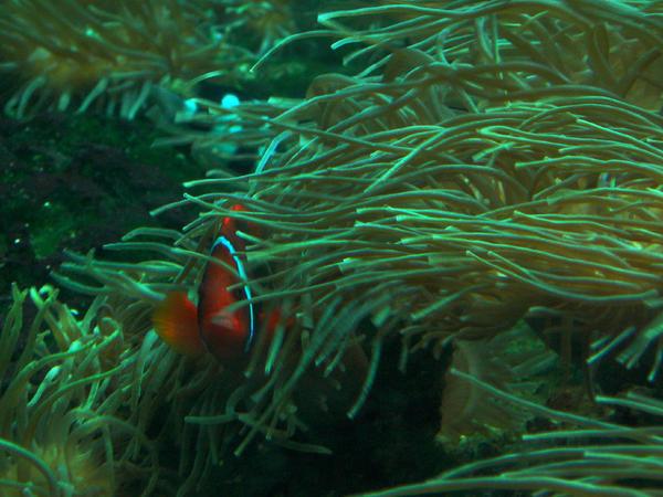 Nemo by danette54