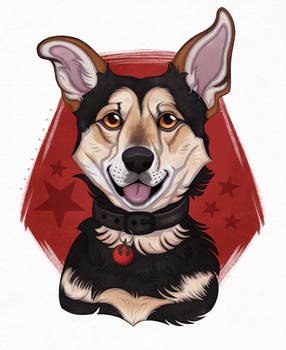 Ruky The Dog (C)