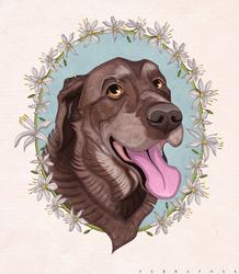 Chocolate Labrador (C)