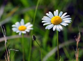 Spring by Rynge