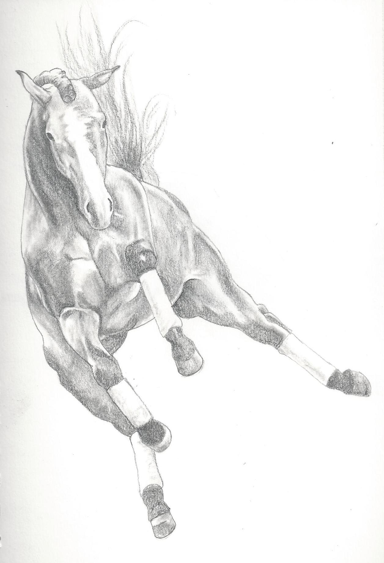 Jumping horse sketch