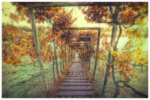 Vineyards by jendrynDV