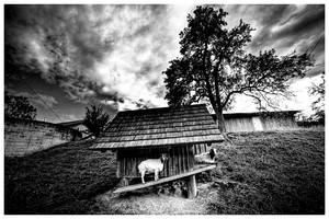 Goats by jendrynDV