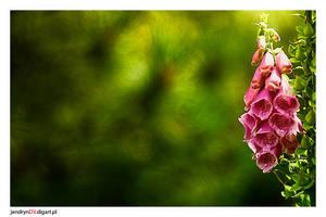 Nature part 1 by jendrynDV
