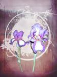 Iris B-Day