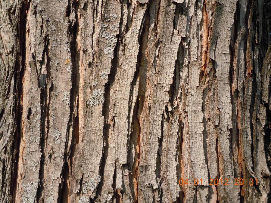 Tree Bark_1