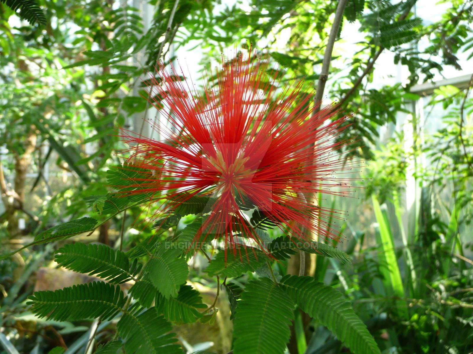 palmgarden frankfurt