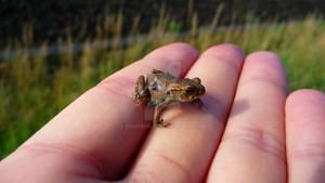 Little Friend (2)