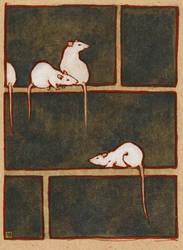 rats by luve