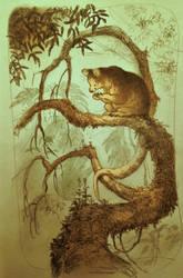tree roo