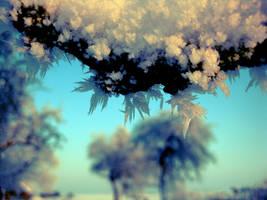 Snow.. by Pamba