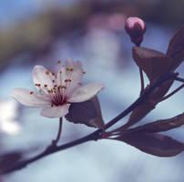 Spring by Pamba
