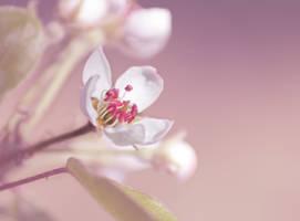 Tenderness by Pamba