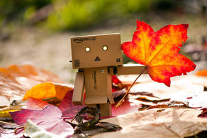 Light up the autumn by Pamba