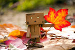Light up the autumn