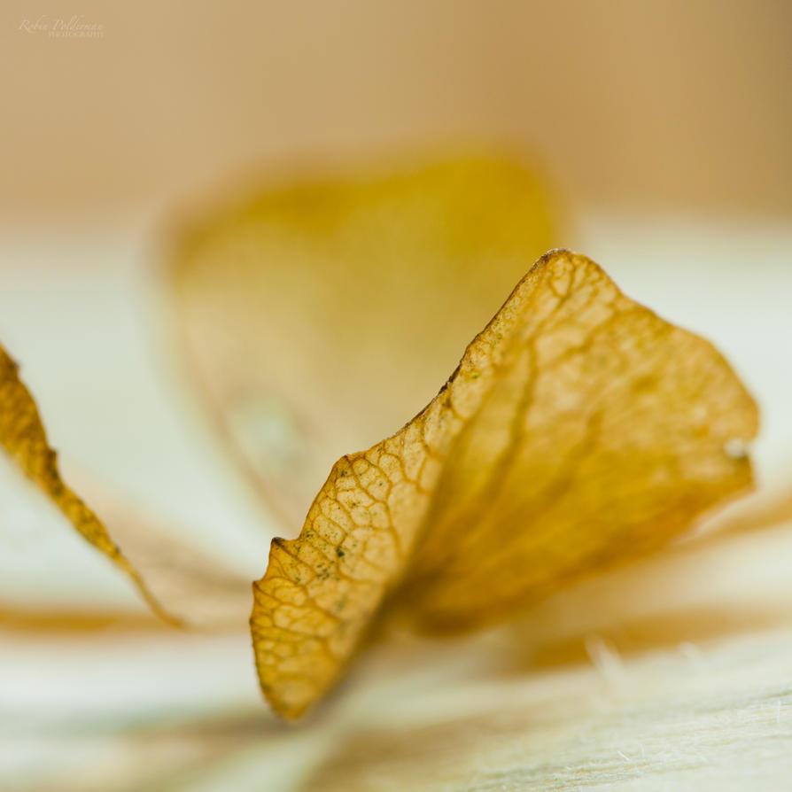 Veins by Pamba