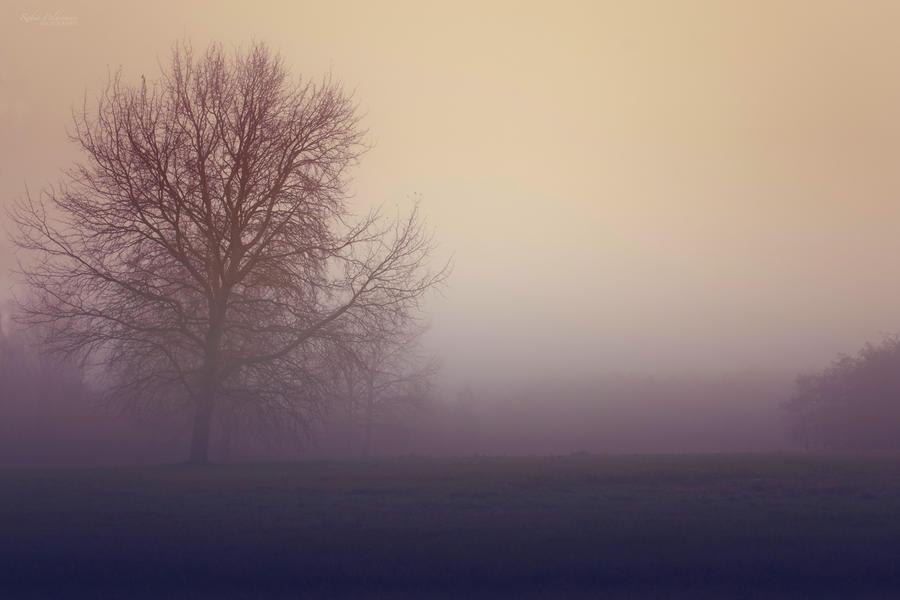 A misty morning by Pamba