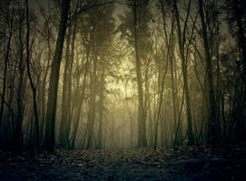 Darkness falls by Pamba