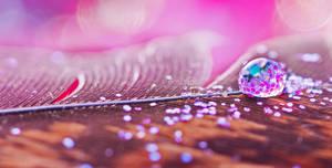 Glitters by Pamba